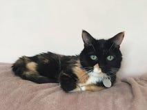 Πράσινη Eyed θηλυκή γάτα στοκ εικόνες