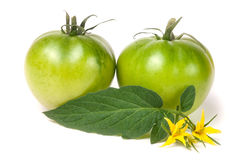 Πράσινη unripe ντομάτα δύο με ένα λουλούδι και ένα φύλλο που απομονώνονται στο άσπρο υπόβαθρο Στοκ φωτογραφία με δικαίωμα ελεύθερης χρήσης