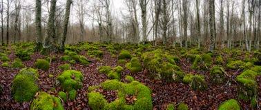 πράσινοι βράχοι Στοκ εικόνες με δικαίωμα ελεύθερης χρήσης