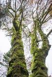 Πράσινοι γίγαντες Στοκ φωτογραφία με δικαίωμα ελεύθερης χρήσης
