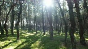 Πράσινοι δάσος και ήλιος στα ανώτατα δέντρα, κανένας άνθρωπος