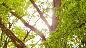 Πράσινοι δέντρα και φοίνικες ενάντια στο μπλε ουρανό και το λάμποντας ήλιο Έννοια φύσης διακοπών ταξιδιού Κοιτάξτε επάνω στην άπο φιλμ μικρού μήκους