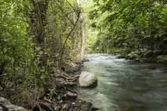 Πράσινοι δασικοί τοπίο και ποταμός με την κίνηση του νερού στοκ εικόνες με δικαίωμα ελεύθερης χρήσης