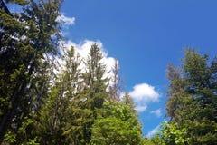 Πράσινοι ερυθρελάτες και μπλε ουρανός βουνών Στοκ φωτογραφία με δικαίωμα ελεύθερης χρήσης