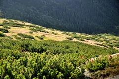 Πράσινοι θάμνοι που αυξάνονται στα βουνά στοκ εικόνες με δικαίωμα ελεύθερης χρήσης