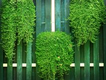 Πράσινοι θάμνοι στο παλαιό ξύλινο υπόβαθρο τοίχων στοκ εικόνα με δικαίωμα ελεύθερης χρήσης