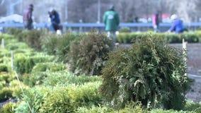 Πράσινοι θάμνοι στο σκηνικό των εργαζόμενων κηπουρών απόθεμα βίντεο