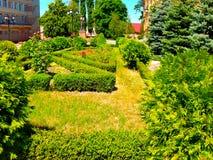 Πράσινοι θάμνοι χορτοταπήτων με τα λουλούδια κοντά στα κτήρια Στοκ Εικόνα