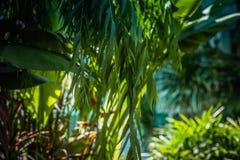 Πράσινοι θάμνοι ως εικόνα φυσικού υποβάθρου, πράσινα φύλλα με το morn ελαφριές ακτίνες ηλιοφάνειας στοκ εικόνες