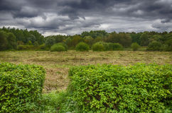Πράσινοι θάμνοι Στοκ φωτογραφία με δικαίωμα ελεύθερης χρήσης