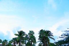 Πράσινοι θαυμάσιοι φοίνικες στο υπόβαθρο μπλε ουρανού Στοκ Φωτογραφίες