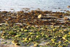 Πράσινοι και κόκκινοι βράχοι Στοκ Εικόνες