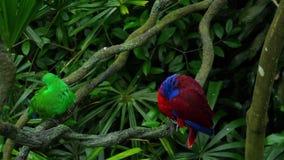 Πράσινοι και κόκκινοι παπαγάλοι ζευγών φιλμ μικρού μήκους