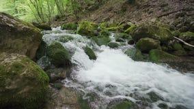 Πράσινοι και υγροί mossy πέτρες και βράχοι κατά μήκος του ποταμού βουνών φιλμ μικρού μήκους