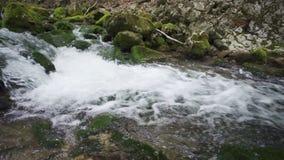 Πράσινοι και υγροί mossy πέτρες και βράχοι κατά μήκος του ποταμού βουνών απόθεμα βίντεο