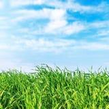 Πράσινοι κινηματογράφηση σε πρώτο πλάνο και μπλε ουρανός χλόης Στοκ Εικόνα