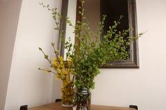 Πράσινοι κλάδοι δέντρων και κλάδοι forsythia με τα κίτρινα λουλούδια στην είσοδο Στοκ φωτογραφία με δικαίωμα ελεύθερης χρήσης