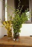 Πράσινοι κλάδοι δέντρων και κλάδοι forsythia με τα κίτρινα λουλούδια στην είσοδο Στοκ εικόνα με δικαίωμα ελεύθερης χρήσης