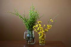 Πράσινοι κλάδοι δέντρων και κλάδοι forsythia με τα κίτρινα λουλούδια Στοκ Φωτογραφίες