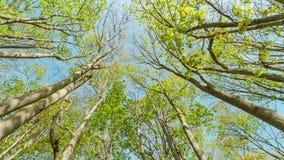 Πράσινοι κλάδοι δέντρων στην άνοιξη απόθεμα βίντεο