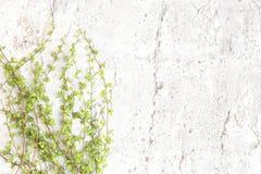 Πράσινοι κλάδοι δέντρων στο άσπρο υπόβαθρο πετρών Στοκ Εικόνες