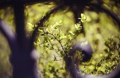 Πράσινοι κλάδοι των Μπους και των δέντρων πίσω από έναν πεταλωμένο φράκτη Στοκ φωτογραφία με δικαίωμα ελεύθερης χρήσης