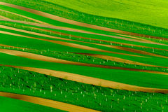 Πράσινοι κυματιστοί λόφοι στη νότια Μοραβία Στοκ εικόνα με δικαίωμα ελεύθερης χρήσης