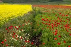 Πράσινοι κόκκινος και κίτρινος Στοκ φωτογραφίες με δικαίωμα ελεύθερης χρήσης