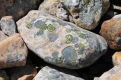 Πράσινοι κύκλοι αλγών στο βράχο Στοκ εικόνα με δικαίωμα ελεύθερης χρήσης