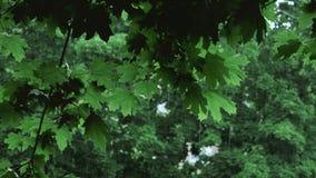 Πράσινοι κλάδοι δέντρων κάτω από την πέφτοντας βροχή φιλμ μικρού μήκους