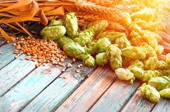 Πράσινοι λυκίσκοι, βύνη, αυτιά του κριθαριού και του σιταριού σίτου στοκ φωτογραφία με δικαίωμα ελεύθερης χρήσης