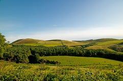 πράσινοι λόφοι χλόης Στοκ Εικόνες