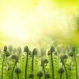 Πράσινοι νεαροί βλαστοί ferm κάτω από τον ήλιο στοκ φωτογραφία με δικαίωμα ελεύθερης χρήσης