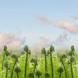Πράσινοι νεαροί βλαστοί ferm κάτω από το μπλε ουρανό στοκ εικόνα