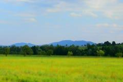 Πράσινοι τομέας και δέντρα Carpathians Στοκ εικόνα με δικαίωμα ελεύθερης χρήσης