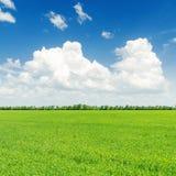 Πράσινοι τομέας και μπλε ουρανός χλόης με τα άσπρα σύννεφα Στοκ εικόνα με δικαίωμα ελεύθερης χρήσης