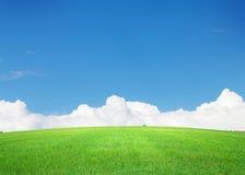 Πράσινοι τομέας και μπλε ουρανός χλόης με τα σύννεφα στον ορίζοντα Στοκ Εικόνες