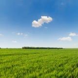 Πράσινοι τομέας και μπλε ουρανός χλόης με τα σύννεφα Στοκ Φωτογραφίες