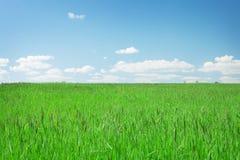 Πράσινοι τομέας και μπλε ουρανός χλόης με τα σύννεφα Στοκ φωτογραφίες με δικαίωμα ελεύθερης χρήσης