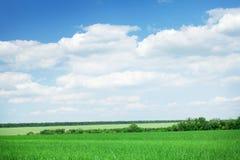 Πράσινοι τομέας και μπλε ουρανός χλόης με τα σύννεφα Στοκ Εικόνα