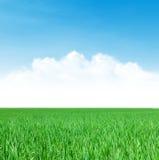 Πράσινοι τομέας και μπλε ουρανός χλόης με τα σύννεφα Στοκ Εικόνες