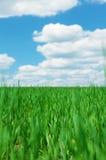 Πράσινοι τομέας και μπλε ουρανός χλόης με τα σύννεφα Στοκ εικόνες με δικαίωμα ελεύθερης χρήσης