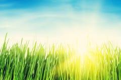 Πράσινοι τομέας και μπλε ουρανός χλόης με τον ήλιο Στοκ φωτογραφίες με δικαίωμα ελεύθερης χρήσης