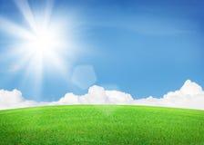 Πράσινοι τομέας και μπλε ουρανός χλόης με τον ήλιο Στοκ Φωτογραφίες
