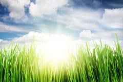 Πράσινοι τομέας και μπλε ουρανός χλόης με τον ήλιο Στοκ Φωτογραφία