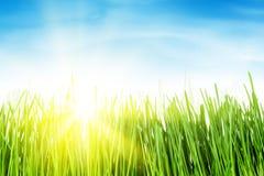 Πράσινοι τομέας και μπλε ουρανός χλόης με τον ήλιο Στοκ εικόνες με δικαίωμα ελεύθερης χρήσης