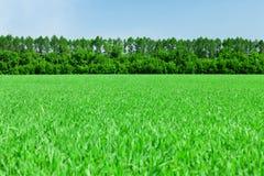 Πράσινοι τομέας και μπλε ουρανός χλόης με το δάσος Στοκ εικόνα με δικαίωμα ελεύθερης χρήσης
