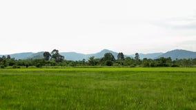 Πράσινοι τομέας ρυζιού και υπόβαθρο βουνών στοκ φωτογραφίες με δικαίωμα ελεύθερης χρήσης