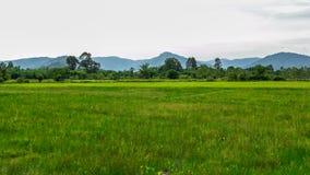 Πράσινοι τομέας ρυζιού και υπόβαθρο βουνών στοκ φωτογραφία με δικαίωμα ελεύθερης χρήσης