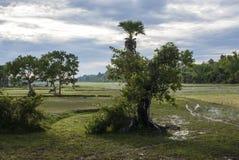 Πράσινοι τομείς γύρω από τον παλαιό ναό Angkor στη δυτικές Καμπότζη - την Ασία Στοκ εικόνα με δικαίωμα ελεύθερης χρήσης
